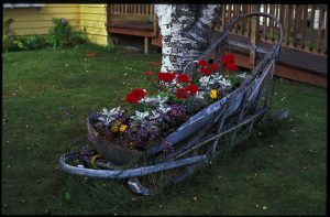 Flowers planted in a dogsled