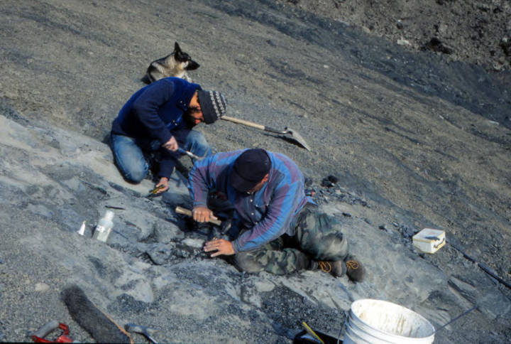 Curvin Metzler and Kevin May excavating the bones of a Hadrosaur found near Glennallen